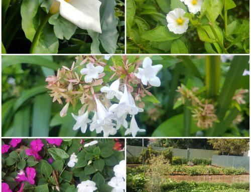 Blackheath Manor in Full Bloom